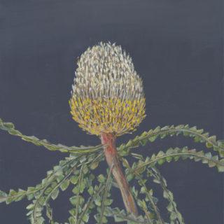 Yellow Banksia 2020